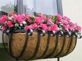 Trồng hoa ban công chung cư như thế nào