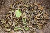 Tác dụng của cây trầm gửi cây gạo