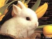 Chữa bệnh tiêu chảy cho thỏ mau khỏi