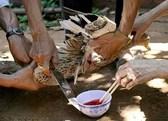 Cách hãm tiết canh vịt sạch sẽ ngon miệng ,an toàn cho sức khỏe