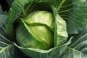 8 thực phẩm siêu tốt chữa trị đau dạ dày hiệu quả