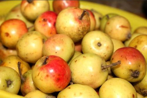 Quả táo mèo còn có tên gọi là quả chua chát. Táo mèo mọc hoang và được trồng tại các tỉnh Yên Bái, Lai Châu, Sơn La, Lào Cai... Trong Đông y, táo mèo có tác