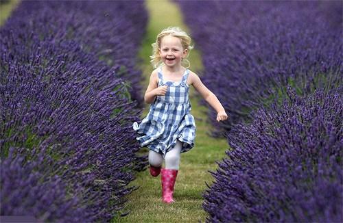 Ý nghĩa của hoa lavender: Câu chuyện tình vượt thời gian