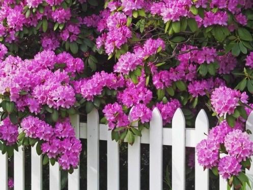 Ý nghĩa hoa bằng lăng thật vô giá và sâu sắc trong kí ức của mỗi con người. Đặc biệt là tuổi học trò thân thương, đằm thắm… Đây là loài hoa có đặc trưng nổi
