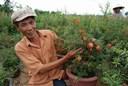 Hướng dẫn trồng cây lựu kiểng đẹp mắt