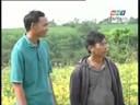 Video clip: Hướng dẫn trồng cây đậu xanh