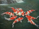 Cách nuôi cá chép koi Nhật mau lớn