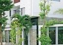 Trồng cây gì trước nhà thì tốt