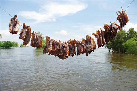 Cách phơi cá khô ngon ăn dần