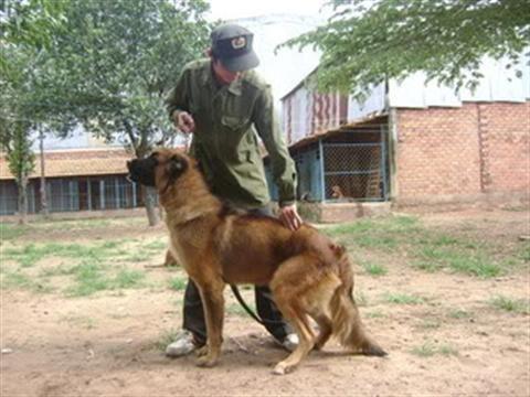 Cách huấn luyện chó cơ bản