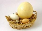 Bà bầu ăn trứng ngỗng