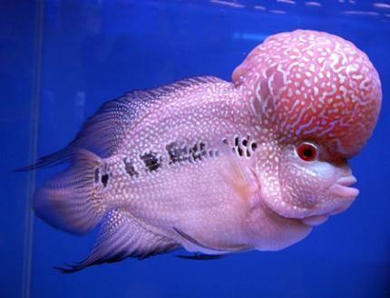 Những loài cá cảnh nước ngọt đẹp nhất