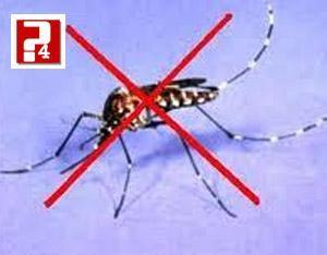 Cách đuổi muỗi đơn giản, an toàn