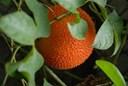 Các món ăn chế biến từ quả gấc bổ dưỡng