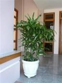 Cách chăm sóc cây cảnh trong chậu cho cây phát triển tốt nhất