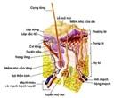 Cách chữa bệnh viêm nang lông hiệu quả bằng thiên nhiên
