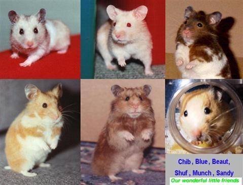 Chữa bệnh tiêu chảy cho hamster. Thú cưng của bạn bị tiêu chảy bạn rất lo lắng. Hãy tham khảo cách sau nhé! CÁCH CHỮA BỆNH TIÊU CHẢY CHO HAMSTER