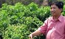 Hướng dẫn trồng ớt chỉ thiên hiệu quả năng suất cao