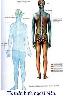 Bệnh lý thoái hóa cột sống và thần kinh tọa ở người bệnh