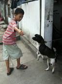 Triệu chứng của bệnh nhiễm sán chó