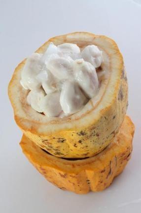 Cách chế biến trái ca cao thơm ngon, hấp dẫn