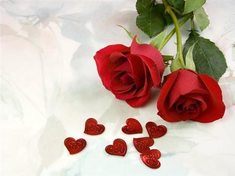 Cách trồng hoa hồng Đà Lạt