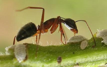 Mẹo vặt diệt kiến, đuổi kiến hiệu quả