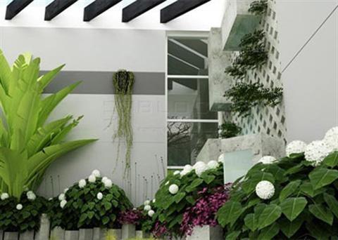 Phong thủy cây cảnh trong nhà