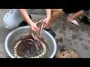 Video Clip: Cách chế biến rắn Ráo cực đơn giản