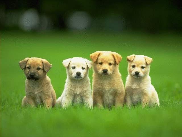 Các bệnh thường gặp ở chó và cách chăm sóc