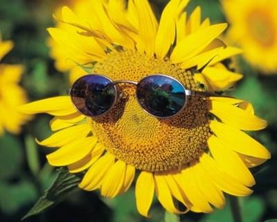 Image result for ý nghĩa hoa hướng dương PHUNUNET
