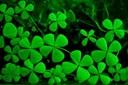Ý nghĩa của cỏ ba lá: tượng trưng cho may mắn