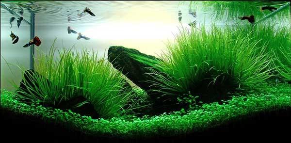 Mộtbể cá cảnhkết hợp với cây thủy sinh sẽ làm cho người chơi thích thú hơn. Bạn cũng muốn có mộtbể thuỷ sinh sinh độngnhư thế, bạn muốn tự tạo mộtbể thủy