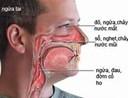 Viêm mũi dị ứng - Nguyên nhân, triệu chứng, điều trị và phòng ngừa